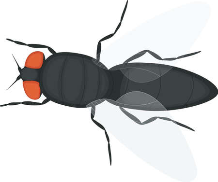 Cartoon Cute Fly Vector illustration.