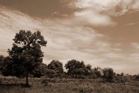 brownish: Brownish sky background