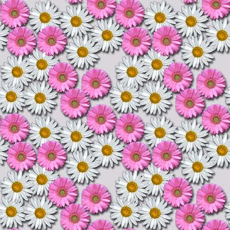 white daisies: Garbera and White Daisies with Grey Background