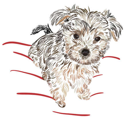terriers: sketch Yorkshire Terrier