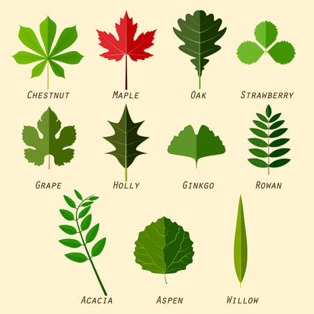 Simple silhouettes of leaves with names of plants in flat design