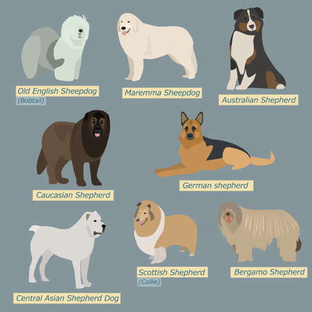 caucasian shepherd: Simple silhouettes of dogs. Types of sheepdogs in flat design Illustration