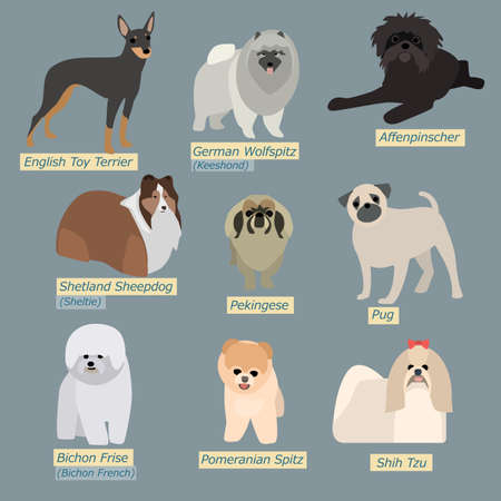 shih tzu: Simple silhouettes of dogs. Types of mini-dogs in flat design Illustration