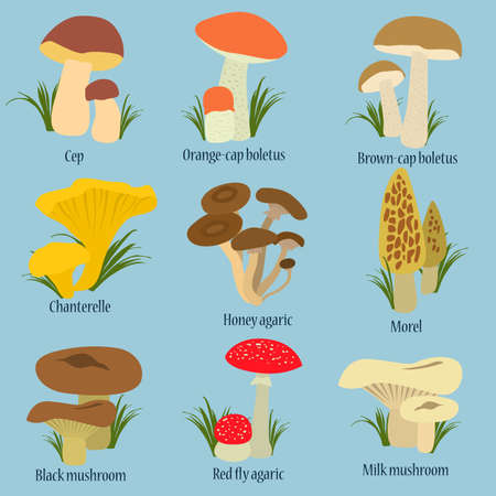 cep: Collection of mushrooms with names in flat design