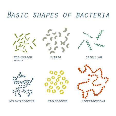 staphylococcus: Illustration of basic shapes of bacteria in flat design
