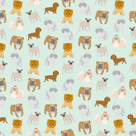 shih tzu: Seamless colorful background made of different breeds of dogs in flat design