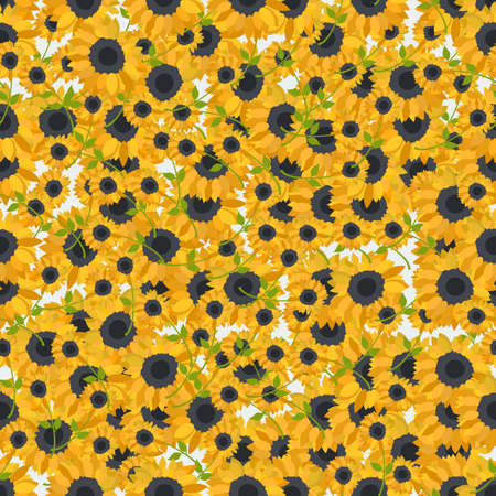 sunflower: Seamless colorful background made of sunflowers  in flat design