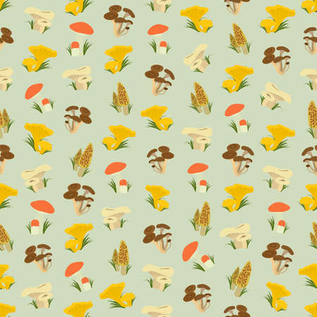 morel: Seamless colorful background made of  different kind of mushrooms