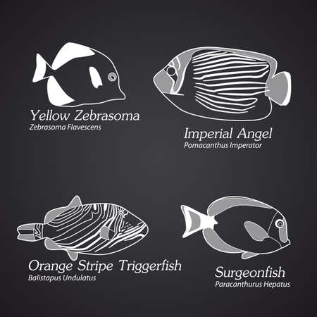 triggerfish: Exotic fish in linear style.