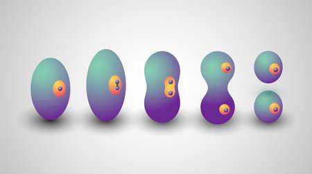 Ilustración sobre división celular con todas las etapas en estilo isométrico.