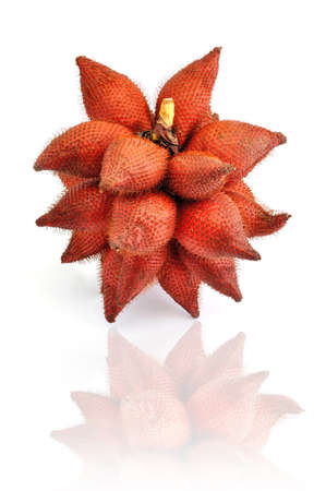 Red Salak on White Background photo