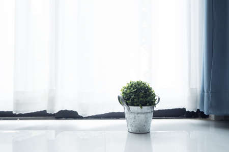 tile flooring: Tile flooring with green dwarf tree on flower pot and sunlight from glass of windows.