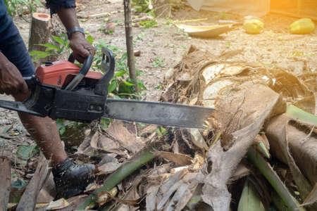 human hand hold Sawing machine cutting coconut tree.
