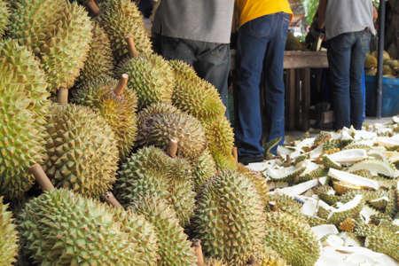 garden man slicing durian fruit. yellow fruit.