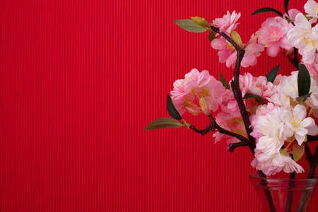 Composition with Pink sakura flower on Red background.