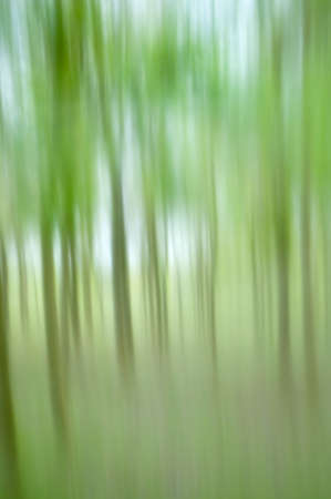 Blurred image of a plantation of young trees