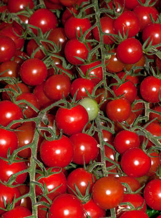 A collection of chrry tomatoes on the vine 版權商用圖片