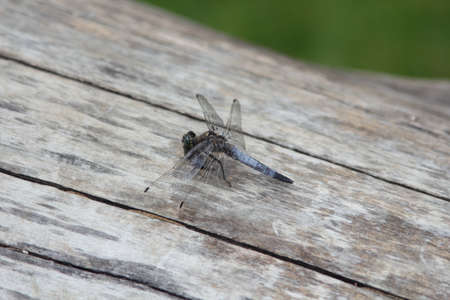 Dragonfly pauses on tree trunk