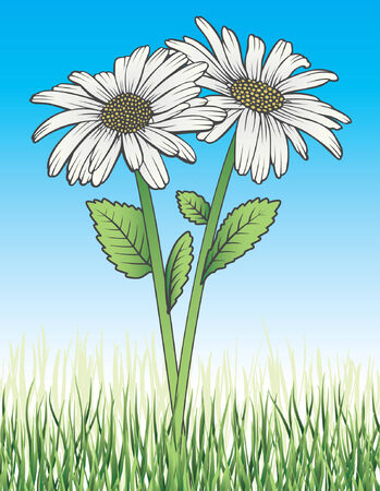 Daisies In Grass is an illustration of two white daisies with stems, leaves, green grass and blue sky background