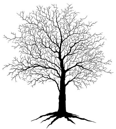 Silhouette d'arbre est une illustration d'un arbre en hiver, sans feuilles dans une silhouette noire Banque d'images - 29305519
