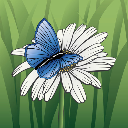Butterfly On Daisy is an illustration of a white daisy and a blue butterfly with a green grass background