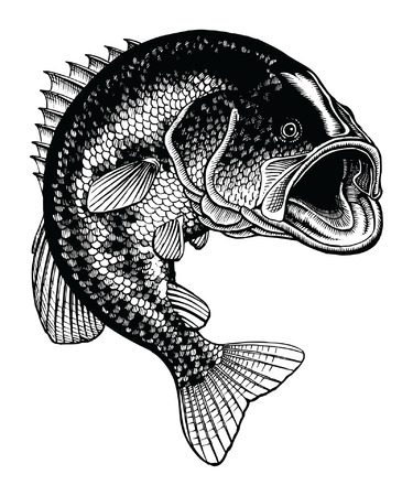 Bass Jumping Vintage is an illustration of a large mouth bass jumping out of the water in a detailed black and white hand-drawn vintage style. Illustration