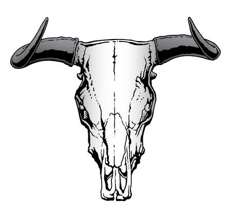 Western Bull or Steer Skull  illustration  イラスト・ベクター素材