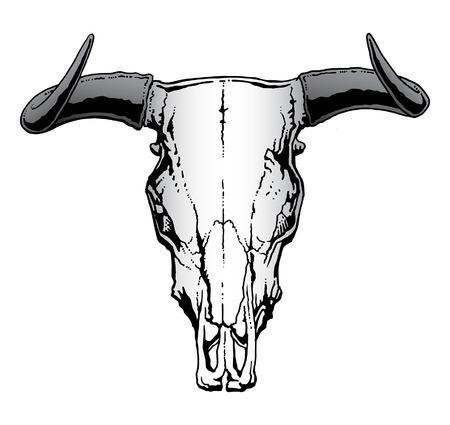 longhorn cattle: Western Bull or Steer Skull  illustration Illustration