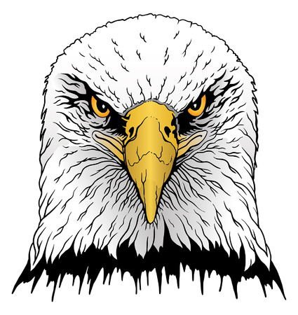 Eagle Head is an illustration of a  bald eagles head in color.