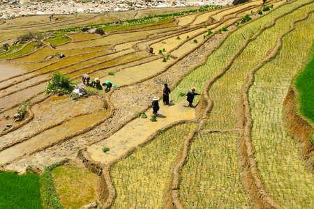 sapa: People working on Sapa rice terraces Vietnam Stock Photo