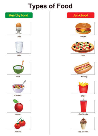 types of food list vector illustration