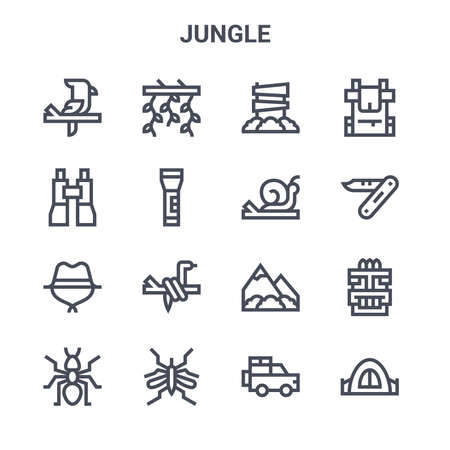 set of 16 jungle concept vector line icons. 向量圖像