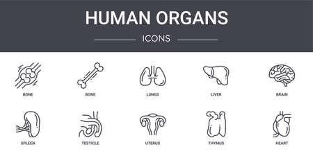 set of 10 human organs concept line icons
