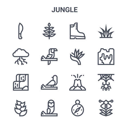 set of 16 jungle concept vector line icons. Illustration