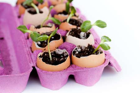 Thinking Green Egg Carton Garden makes for easy planting