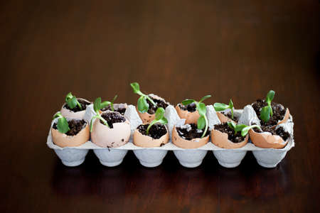 Thinking Green Egg Carton Garden makes for easy planting photo