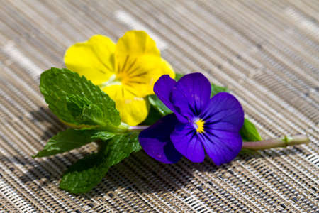 Mint with purple and yellow pansie on a textured mat Stock Photo - 14042159