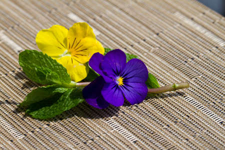 Mint with purple and yellow pansie on a textured mat Stock Photo - 14042162