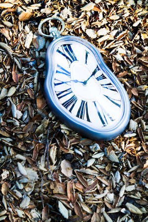 Clock lost in the leaves Imagens