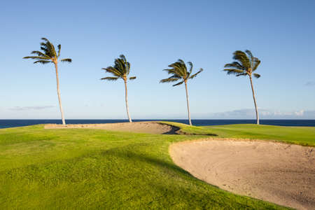 Beautiful Golf Course in Hawaii on the Ocean with Palm Trees