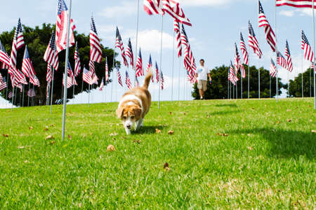 Mixed Breed Dog and his owner walking on a green lawn covered with American Flags