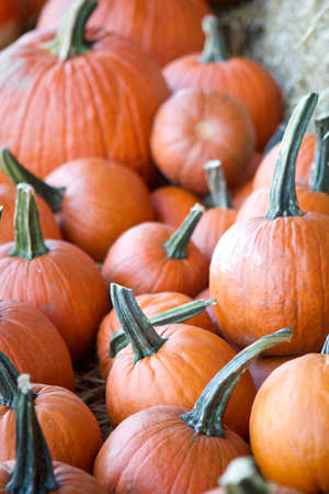 Pumpkins ready to purchase after harvest Imagens