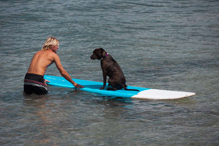 Trusting Dog loving water on a surfboard photo
