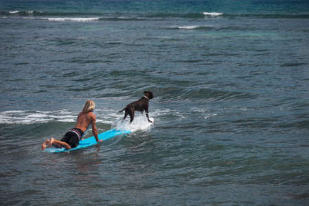 Dog on a surfboard with a Blonde Surfer Paddeling photo