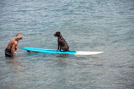 Trusting Dog loving water on a surfboard with his owner photo