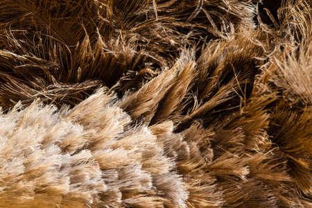 plummage: Plumas de avestruz constituyen un fondo de textura