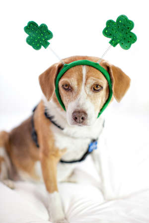 Funny Cute dog Saint Patricks Day fun photo