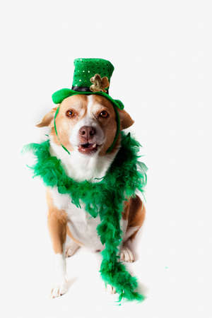 Happy St Patrick Stock Photo - 18076154