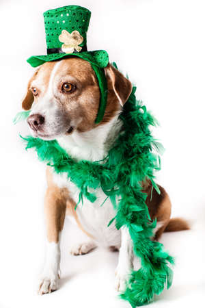 patrick: Happy St Patrick s Dogs Day Stock Photo
