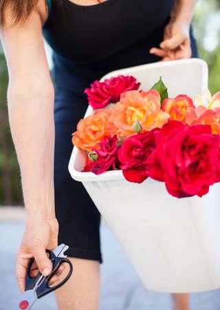 Woman carrying fresh cut roses Stock Photo - 20529819